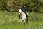 Rolo hacking round the fields