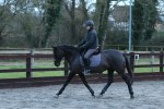 Little Lexi in her flatwork lesson