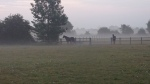 Lily and Lexi in the morning mist!