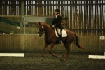Lily practising her dressage